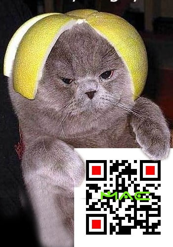 cat with lemon on head and QR code