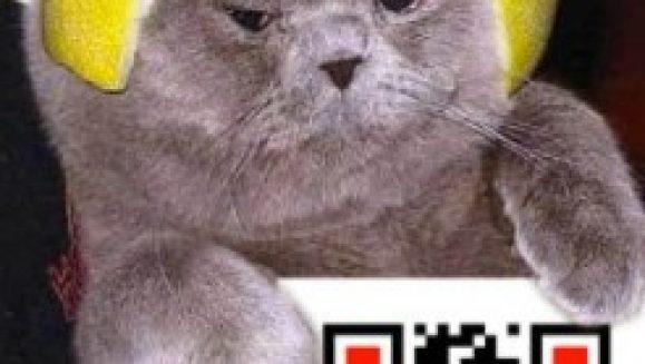 qr-codes-and cat