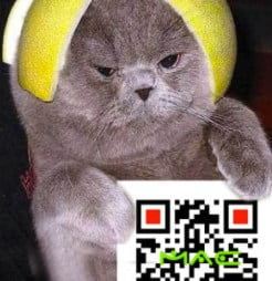 qr-codes-and cat